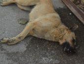 В Феодосии травят собак - животные умирают в мучениях  (видео 18+)