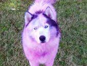 В Крыму живодёры продают перекрашенных в розовый цвет собак