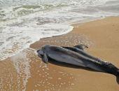 На берег под Феодосией выбросило мертвого дельфина с привязанным куском бетона
