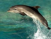 В Крыму предложили давать десять лет тюрьмы за убийство дельфинов