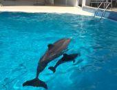 В Коктебельском дельфинарии снова пополнение (фото)