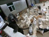 В столице Крыма построят приют для безнадзорных животных