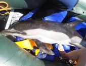 В Крыму сотрудники МЧС и экологи спасли обессилевшего дельфина (фото)