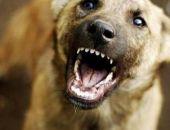 В Крыму количество людей, покусанных животными, ежегодно увеличивается