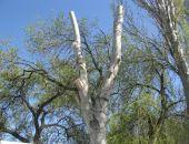 Горожане могут подать заявку на спил дерева