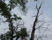 В сквере чернобыльцев опасно находиться из-за сухих деревьев