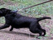 Внимание: в городах и поселках Крыма проходит массовая стерилизация бездомных собак