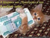 В Симферополе вор-рецидивист ограбил зоомагазин с помощью кошки
