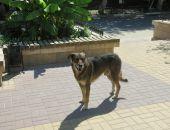 В Крыму насчитали не менее 15 тысяч бездомных собак