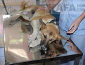 На стерилизацию бездомных животных в Крыму потратят почти 30 миллионов рублей