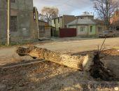 В Феодосии продолжат сносить деревья-«угрозы»