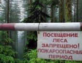 В Крыму установлен запрет на посещение лесов
