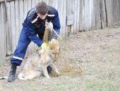 Власти Симферополя принимают заявки на отлов безнадзорных животных