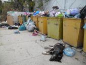 В Коктебеле проблемы с вывозом мусора
