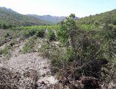В Крыму селевым потоком уничтожено более 80 га виноградников «Массандры» под Судаком (фото)