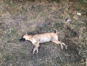 Феодосийцы вновь заговорили о травле собак