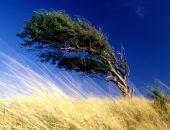 МЧС предупредило о сильном ветре в Крыму во вторник, 29 августа