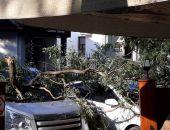 Около кафе «Старый город» обломившаяся ветка повредила автомобиль