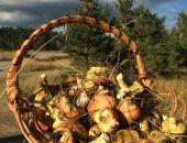 В Крыму начался грибной сезон (фото)