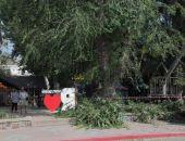 В Феодосии продолжается обрезка деревьев
