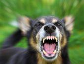 В столице Крыма с сегодняшнего дня введён карантин из-за бешенства собаки