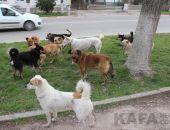 В Евпатории с начала года стерилизовали 700 бродячих собак