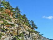 Природа Крыма: прогулка по Боткинской тропе в Ялте (фоторепортаж):фоторепортаж