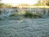 В Крыму в ближайшие дни ночью и утром ожидаются заморозки до -2 градусов, – МЧС