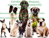 В Феодосии пройдет выставка собак всех пород «Краса Кафы»