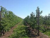 Медведев считает, что Крым надо засадить фруктовыми деревьями
