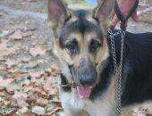 В Феодосии сегодня прошла выставка собак всех пород