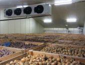 Власти Крыма намерены начать решать проблему отсутствия хранилищ для сельхозпродукции