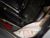 Из Крыма в Украину пытались контрабандно вывезти сокола-кречета (фото)