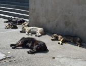 В Феодосии начинается отлов бездомных собак