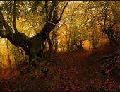 Осенний лес в горах Крыма (фоторепортаж)