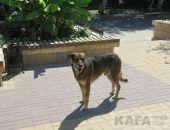 В Феодосии отлавливают бездомных собак