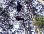 В Крыму парапланерист при приземлении повис на сосне, его снимали спасатели
