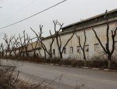 Деревья в центре столицы Крыма приведут к единому стандарту, — Лукашев