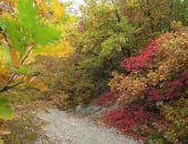 Крымский лес осенью