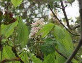 В городах Крыма осенью снова зацвели деревья и весенние цветы (фото)