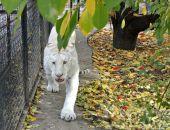 """Животные парка львов """"Тайган"""" в осеннюю пору"""