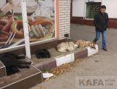 С начала года более 400 феодосийцев пострадали от укусов животных
