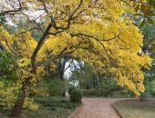 В Никитском ботаническом саду в Крыму открылся парк «Монтедор» (фото)