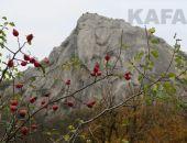 Крымский лес в ноябре:фоторепортаж