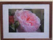В Музее Грина открылась выставка «Дикая роза»