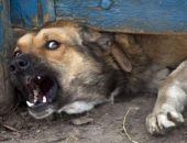 В Подмосковье домашние собаки растерзали пенсионерку