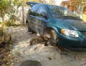 «Попал под лошадь»: в Феодосии владелец авто был придавлен собственным автомобилем (фото)