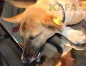 Беспризорные животные нуждаются в помощи феодосийцев