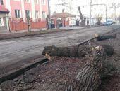 Вдоль Боевой высадят деревья, если не осенью, то весной