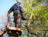 В Феодосии на Армянской пилят деревья (видео):фоторепортаж